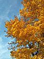Złota jesień - panoramio (1).jpg