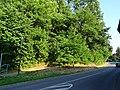 Zehista, 01796, Germany - panoramio.jpg