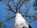 Zombitse National Park Madagascar baobab.jpg
