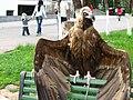 Zoo Tashkent - panoramio.jpg