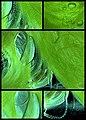 """Vase"" Green algae.jpg"