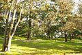 ® S.D. MADRID PARQUE DEL OESTE - ROSALEDA - panoramio (8).jpg