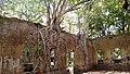 Árvores crescem nas Ruínas de Paricatuba AM.jpg