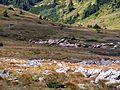 Šumiac - ovečky pod Kráľovou hoľou - panoramio.jpg