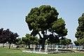 Θεσσαλονίκη 2014 - panoramio (24).jpg