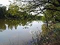 Берег 3-го Короленковского пруда - panoramio.jpg