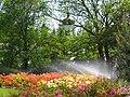 Ботанічний сад ім. М.Гришка IMG 9049.jpg