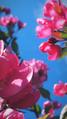 Весна в городе 08.png