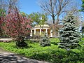 Весна в парку Аскольдова могила IMG 6541.jpg