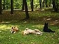 Всім добре в курортному парку в Трускавці.jpg