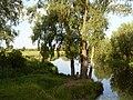 Г.Остер, река Остер (Черниговская обл. 2009) - panoramio.jpg