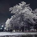 Зима в городе Фергана.jpg