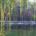 Мальовниче озеро восени в парку Партизанської Слави (1).jpg