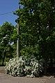 Парк Победы г. Николаев.jpg