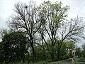 Парк шума Гази Баба во мај (133).JPG