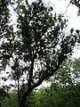 Парк шума Гази Баба во мај (99).JPG