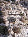 Руины Херсонеса 1.jpg