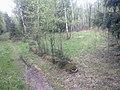 Старое дерево дает жизнь молодым деревьям..jpg