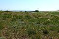 Степная растительность - panoramio (2).jpg