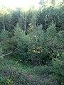 Урочище Могилицы, место расположения курганного могильника Ёлохово.jpg