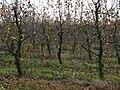 Яблоневый сад, Молодечненский район, Беларусь - panoramio.jpg