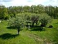 Яблочный сад на территории насосной станции №8 - panoramio.jpg