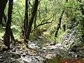 غابات الفرنلق-DSC00015-1.JPG