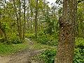 আমার সাথে দেখুন সিংড়া জাতীয় উদ্যান 7.jpg