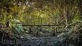 লাউয়াছড়া জাতীয় উদ্যানের গহীনে কাঠের ব্রীজ.jpg