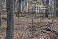 """""""A"""" FORT AND BATTERY HILL REDOUBT - FAIRFAX COUNTY.jpg"""