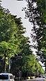 「石神井松の風文化公園」と富士街道沿いの並木道(練馬区).jpg