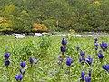 からぬま(Empty marsh) - panoramio.jpg