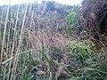 初探吊神山-越野车穿越探路20130206 - panoramio (20).jpg