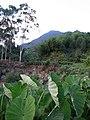 山圩 - panoramio.jpg