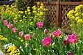 花の文化園 Osaka Prefectural Flowers Garden 2014.4.01 - panoramio.jpg