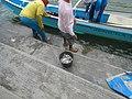 0016Hagonoy Fish Port River Bancas Birds 16.jpg