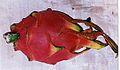 002 dragonfruit.jpg