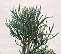 016 cactus tree.jpg