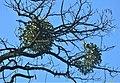 02019 0119 Nature of Beskids.jpg