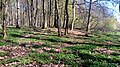 03 Grabhügelgruppe im Waldstück Hainbach.jpg