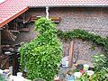 1000-l-Regenwasser-Sammler aus alten Milchsäure-Behälter, mit Feuerbohnen-Ranken überwuchert, September 2014. - panoramio.jpg