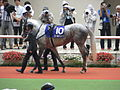 10 Gold Ship (June 23, 2013. 54th Takarazuka Kinen) (9117532050).jpg
