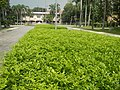 120Mehan Garden Ermita Manila 14.jpg