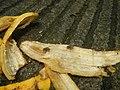 1400Common houseflies eating Bananas 03.jpg