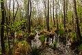 15-05-09-Biosphärenreservat-Schorfheide-Chorin-Totalreservat-Plagefenn-DSCF5556-RalfR.jpg