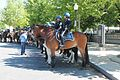 16a.MountedPolice.NPOM.WDC.15May2017 (34821760501).jpg