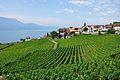 2012-08-12 10-13-47 Switzerland Canton de Vaud Rivaz.JPG