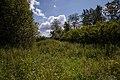 20120721 Парк усадьбы Ухтомских. Остатки аллеи. Акация.jpg