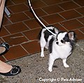 2013 Westminster Kennel Club Dog Show (8466662378).jpg