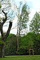 2015-05 ND-42 Ginkgo E-Leithe.jpg